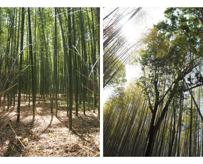 180623 photos Japan74